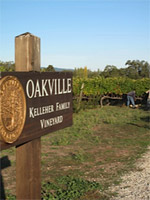 Kelleher Vineyard Oakville